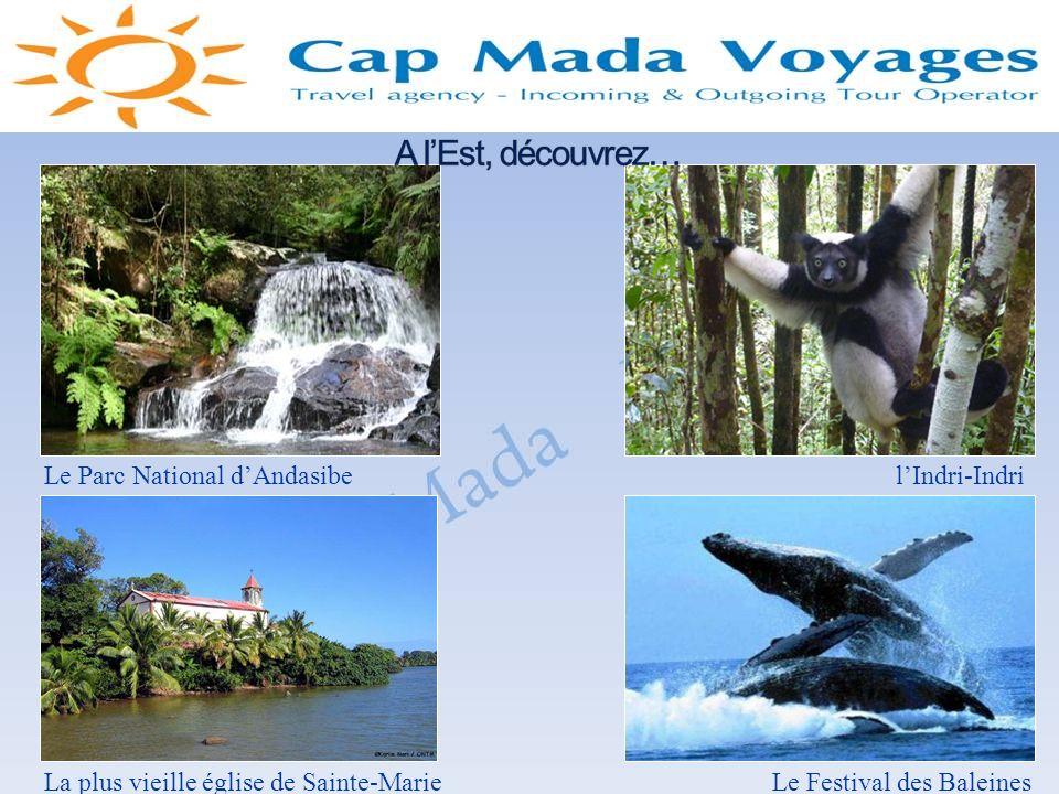 A l'Est, découvrez… Le Parc National d'Andasibe l'Indri-Indri