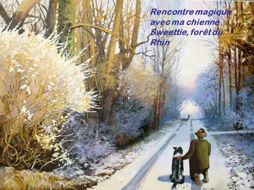 Rencontre magique avec ma chienne Sweettie, forêt du Rhin