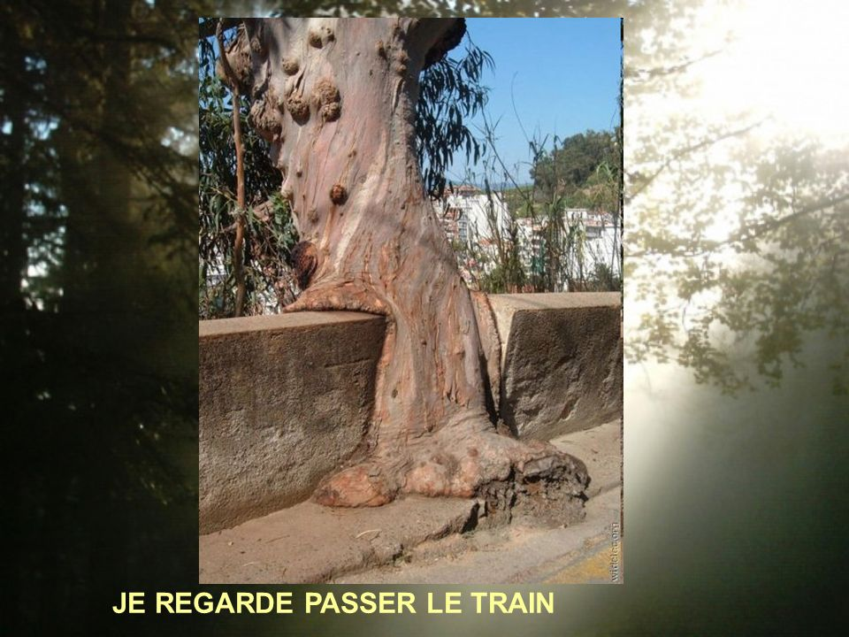 JE REGARDE PASSER LE TRAIN