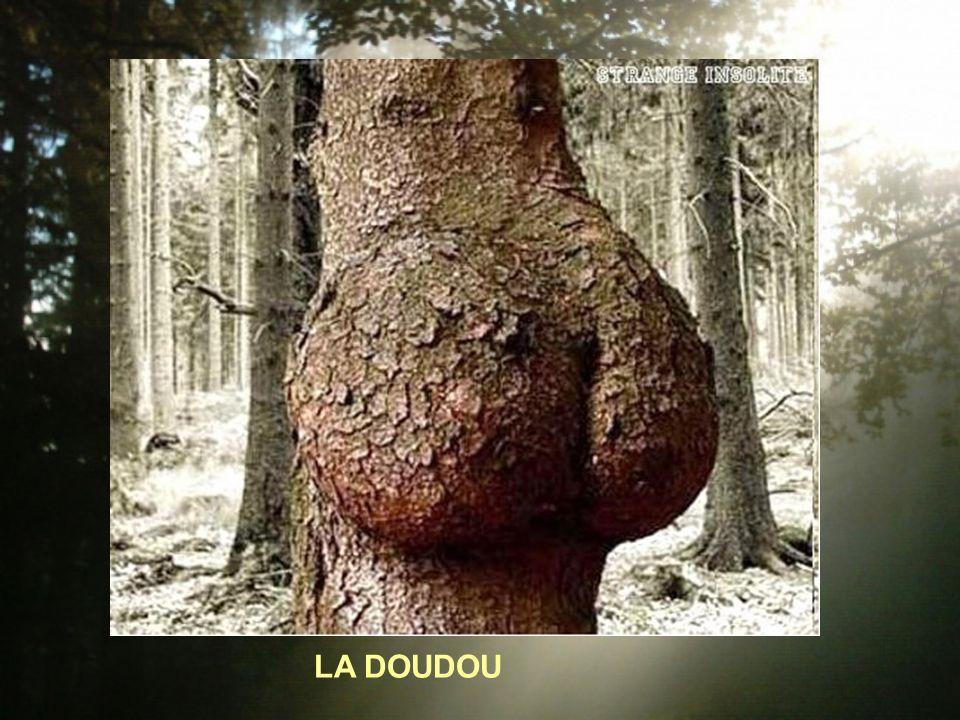 LA DOUDOU