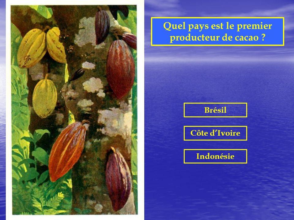 Quel pays est le premier producteur de cacao