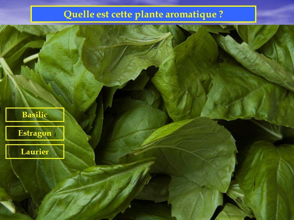 Quelle est cette plante aromatique
