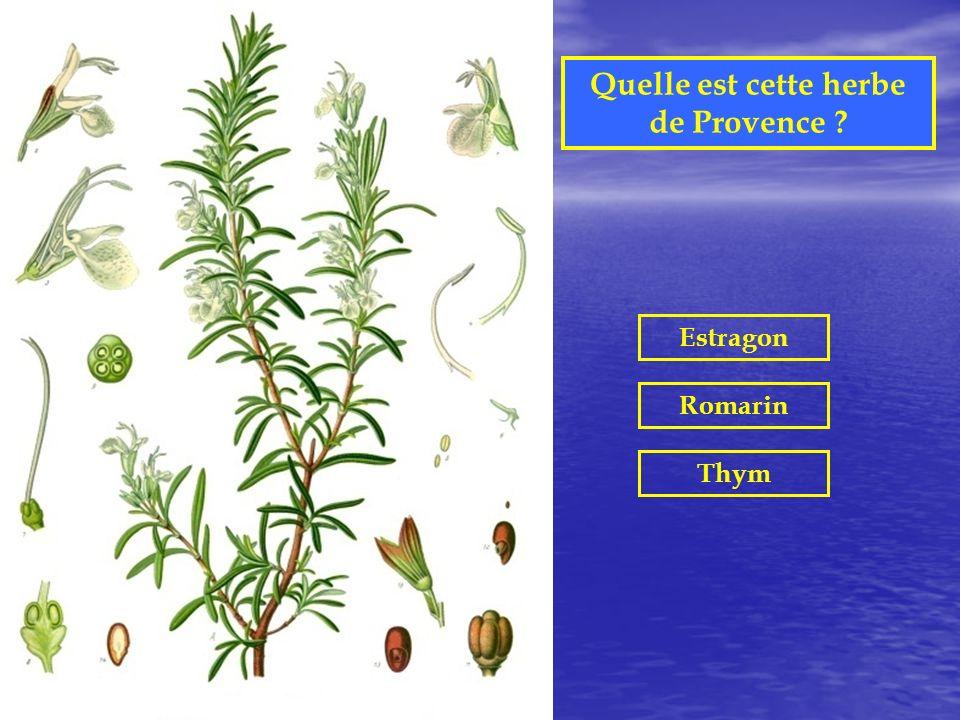 Quelle est cette herbe de Provence