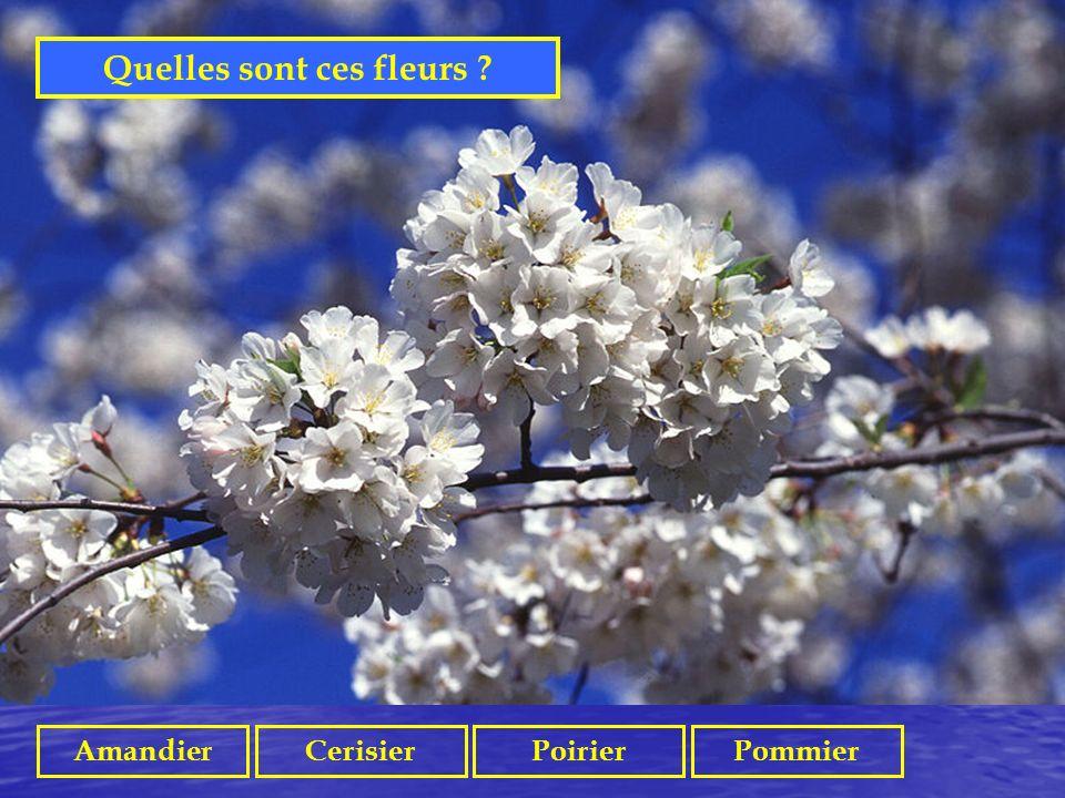 Quelles sont ces fleurs
