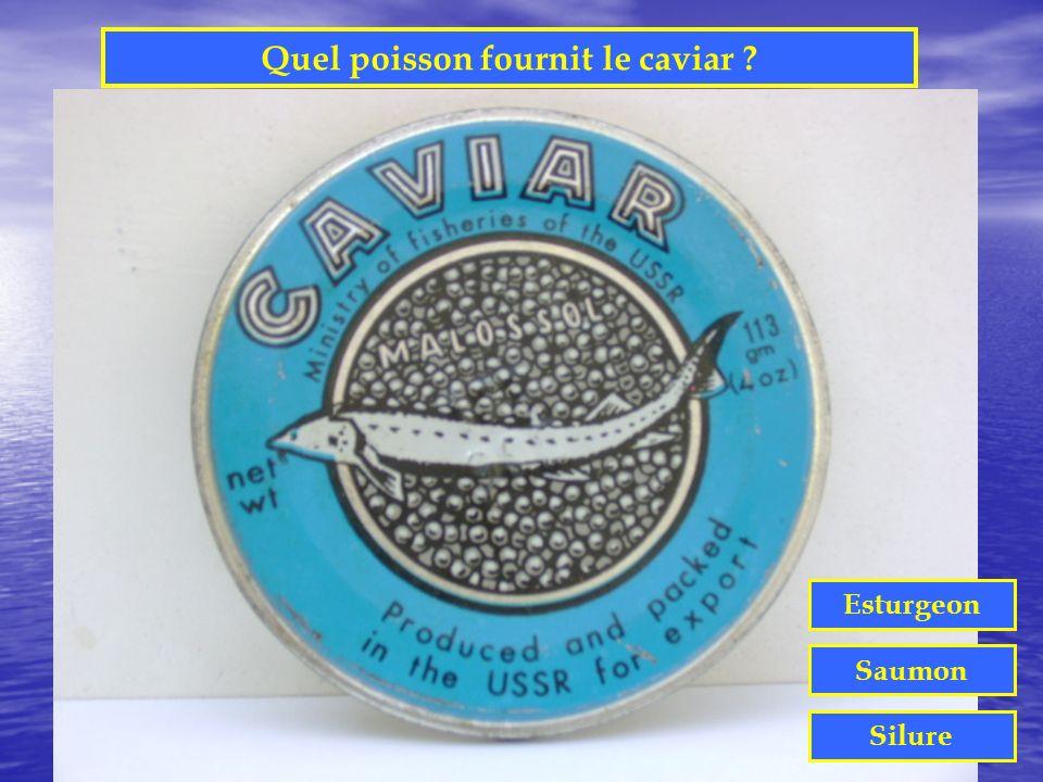 Quel poisson fournit le caviar