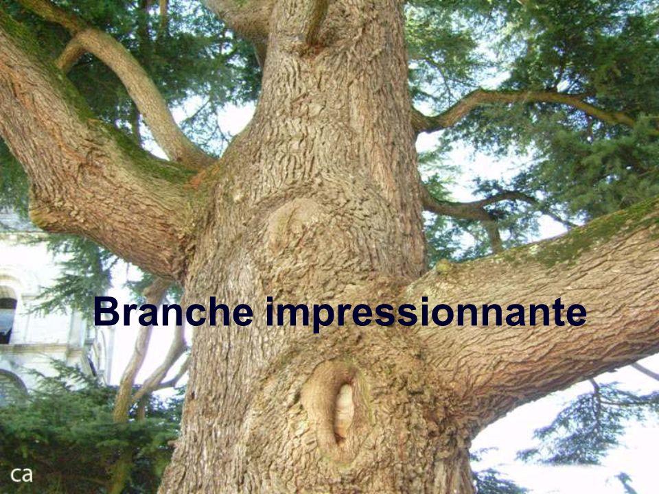 Branche impressionnante