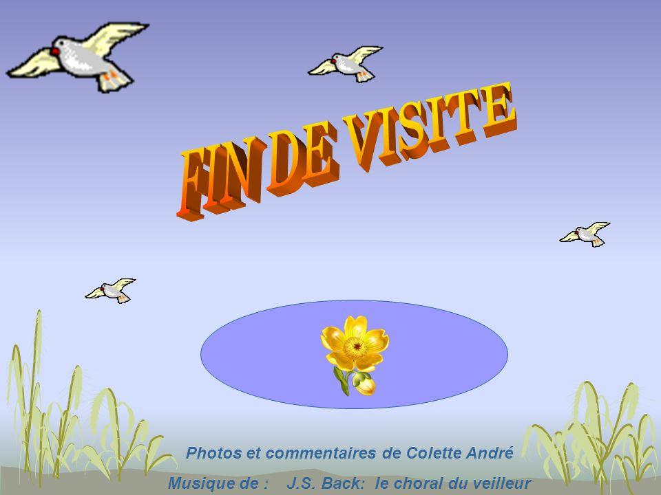 FIN DE VISITE Photos et commentaires de Colette André