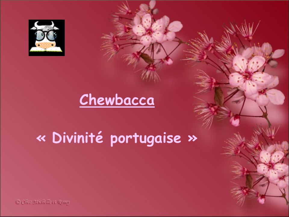 Chewbacca « Divinité portugaise »