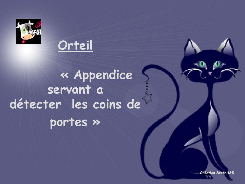 Orteil « Appendice servant a détecter les coins de portes »