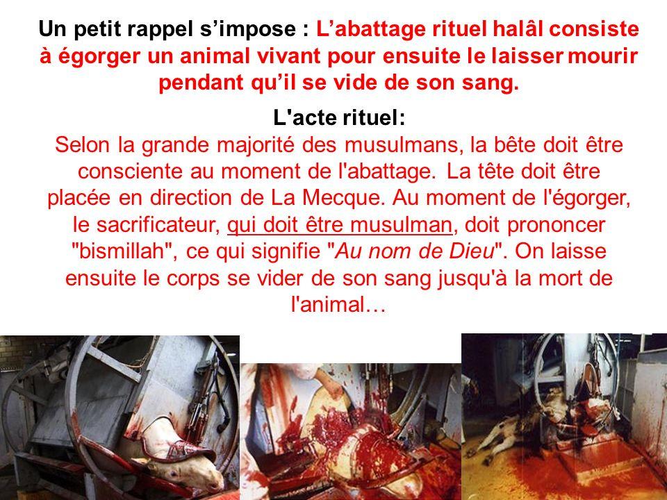 Un petit rappel s'impose : L'abattage rituel halâl consiste à égorger un animal vivant pour ensuite le laisser mourir pendant qu'il se vide de son sang.