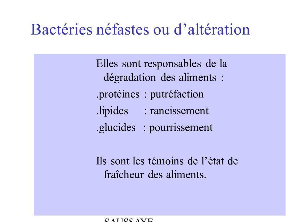 Bactéries néfastes ou d'altération