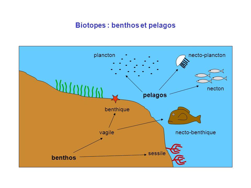 Biotopes : benthos et pelagos