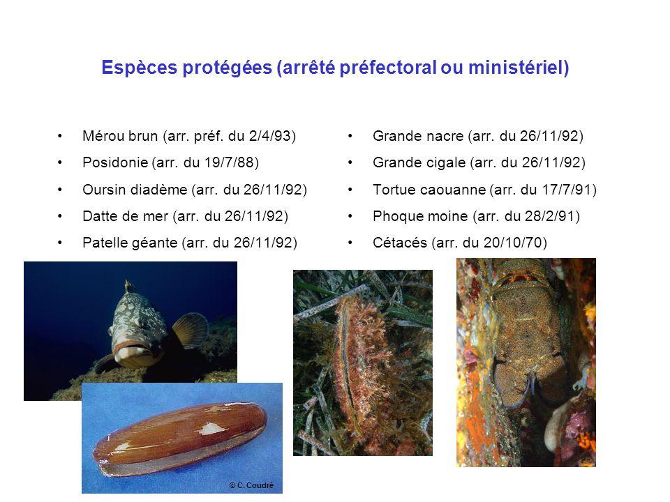Espèces protégées (arrêté préfectoral ou ministériel)