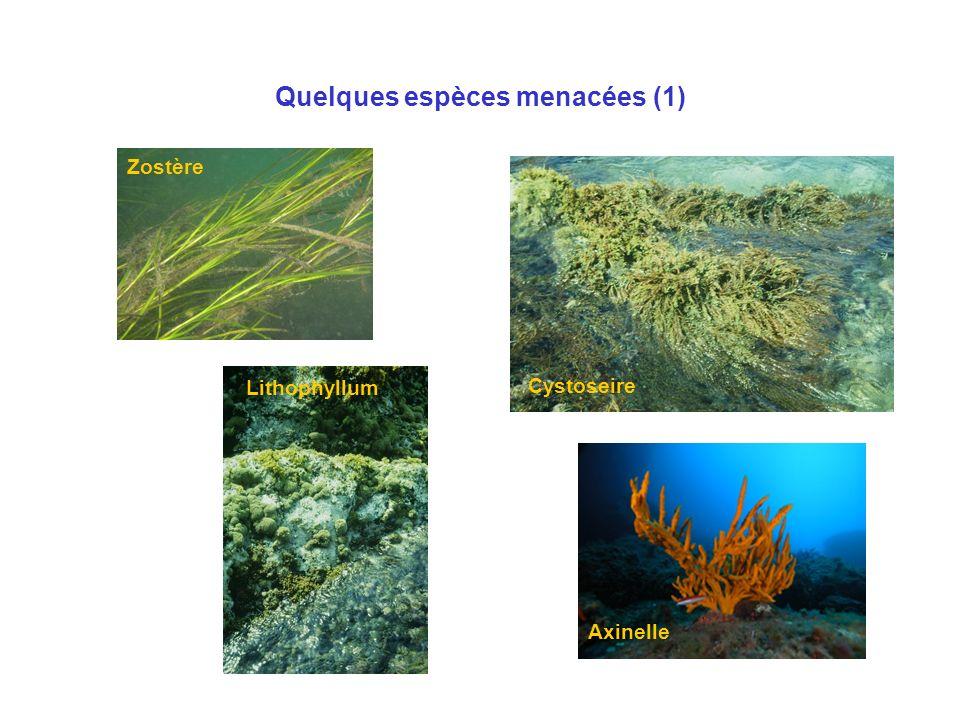 Quelques espèces menacées (1)