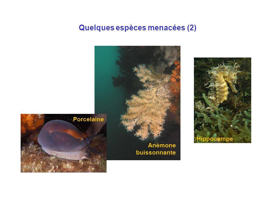 Quelques espèces menacées (2)