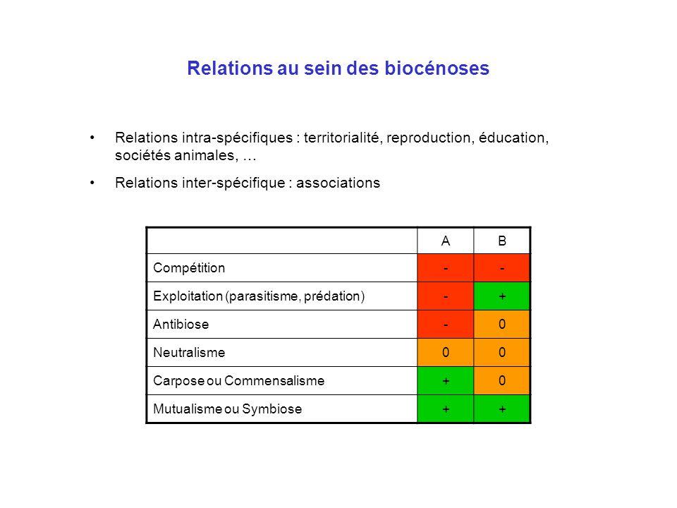 Relations au sein des biocénoses