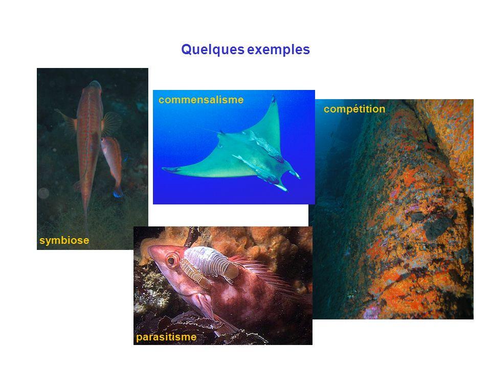 Quelques exemples commensalisme compétition symbiose parasitisme