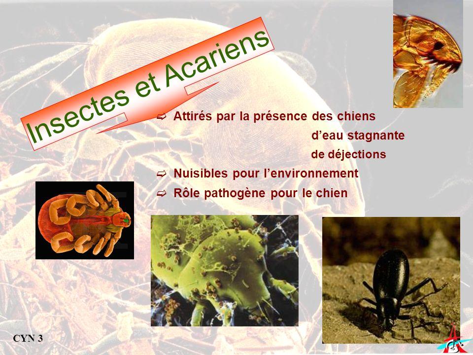 Insectes et Acariens Attirés par la présence des chiens