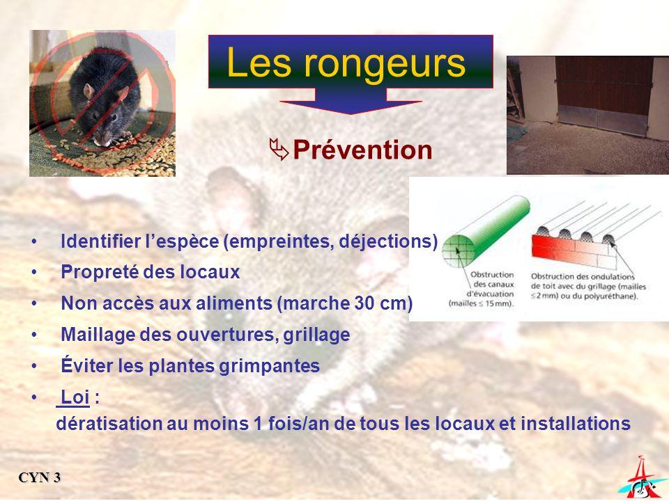 Les rongeurs Prévention Identifier l'espèce (empreintes, déjections)