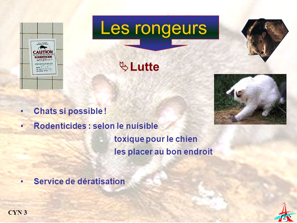 Les rongeurs Lutte Chats si possible !