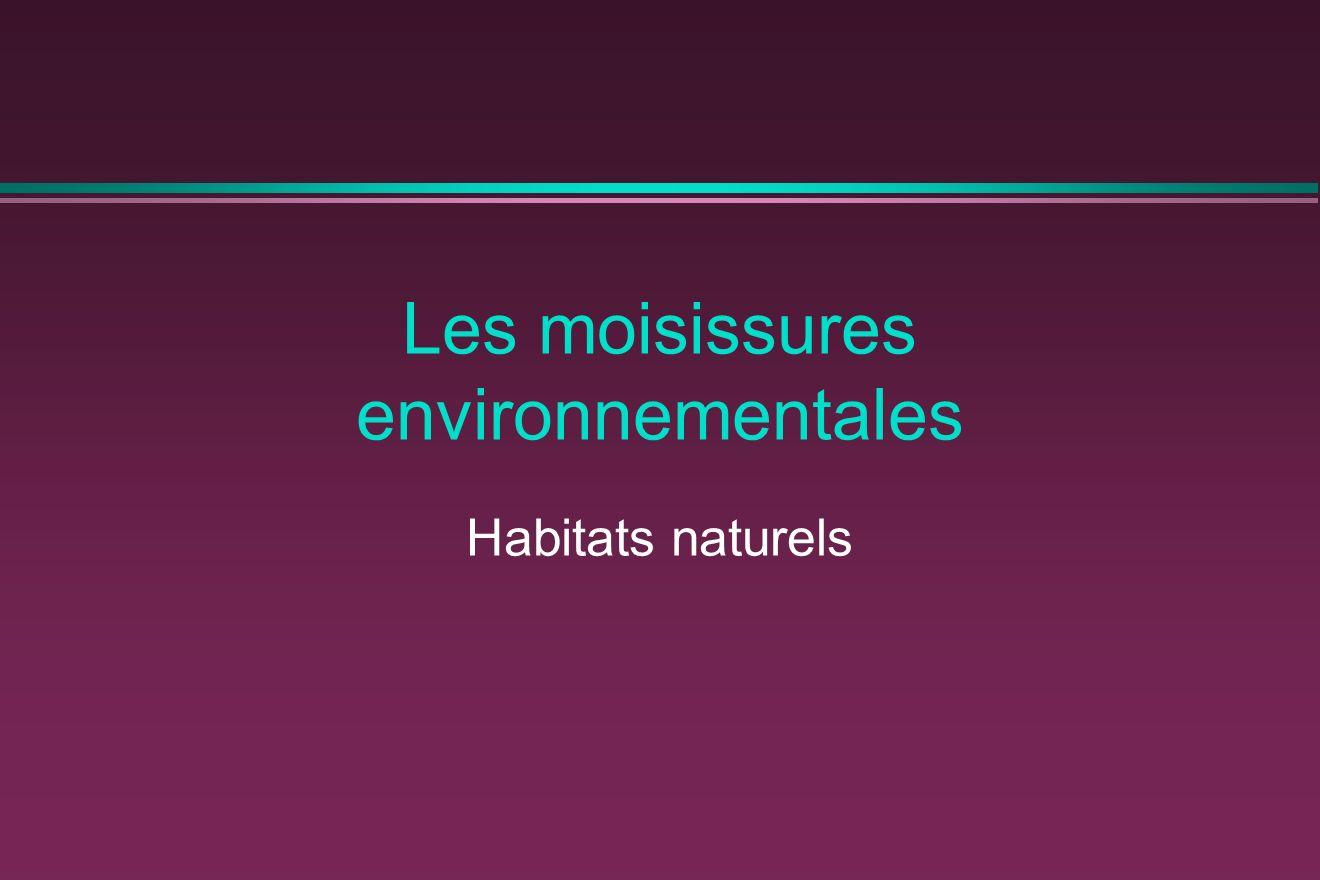 Les moisissures environnementales