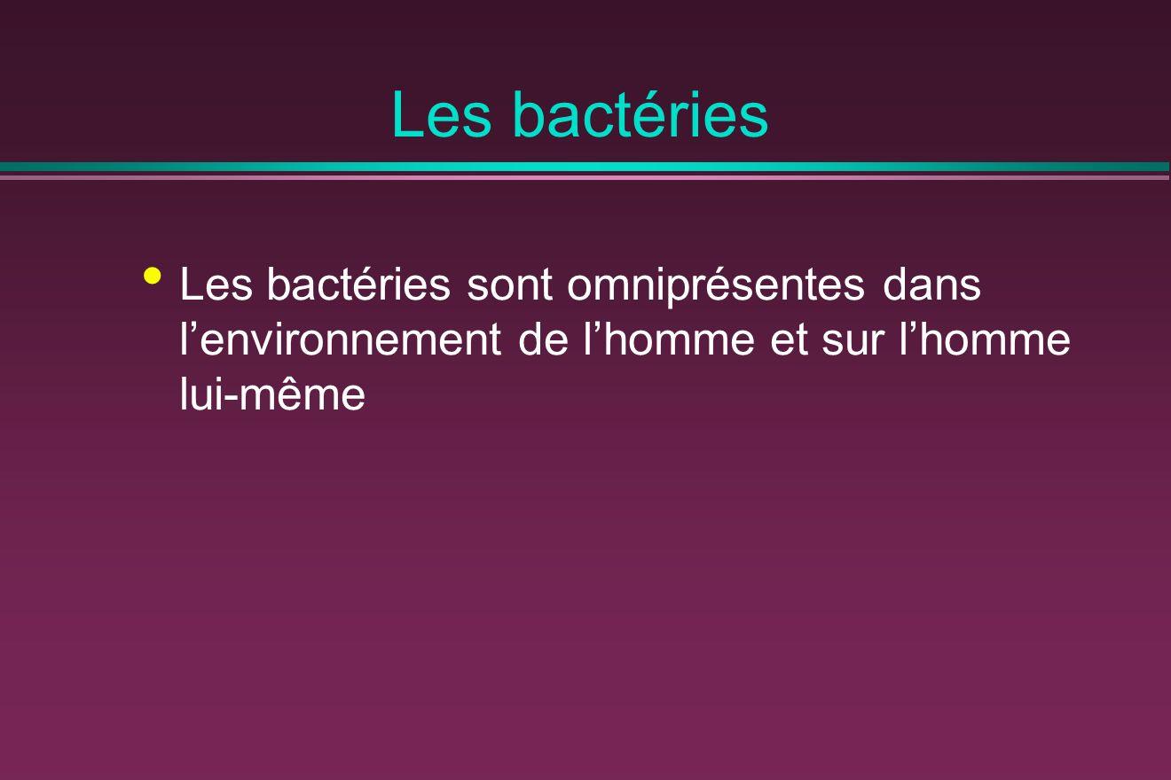 Les bactéries Les bactéries sont omniprésentes dans l'environnement de l'homme et sur l'homme lui-même.