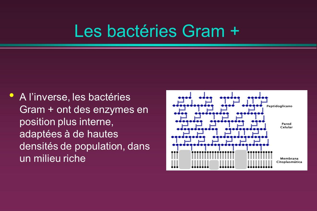 Les bactéries Gram +