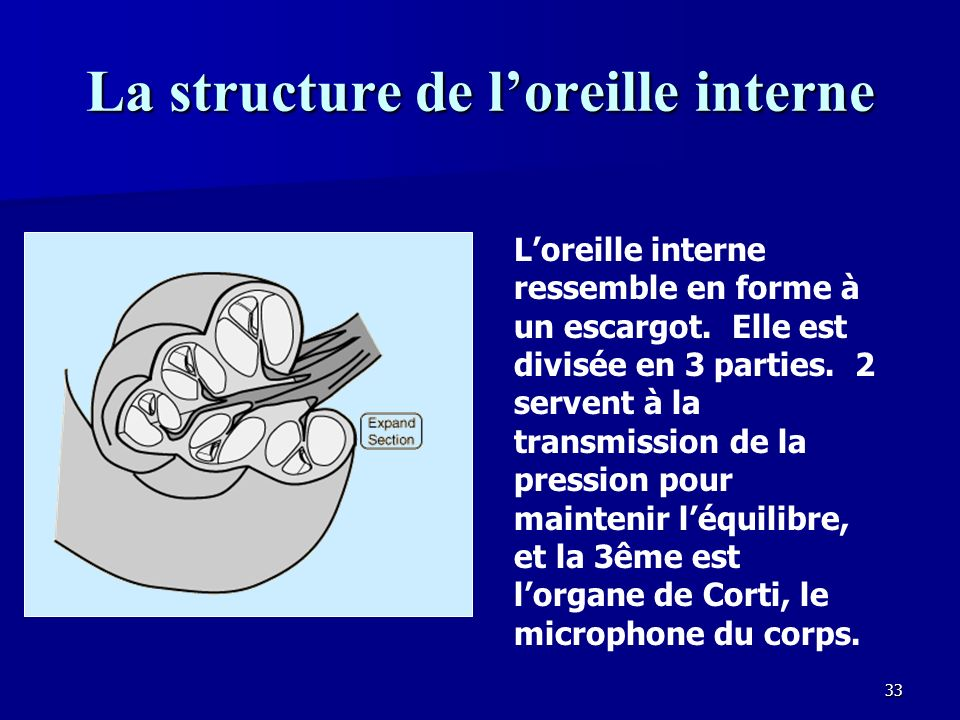 La structure de l'oreille interne