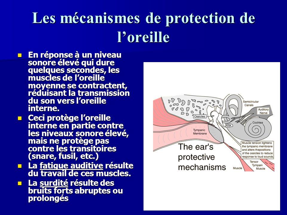 Les mécanismes de protection de l'oreille