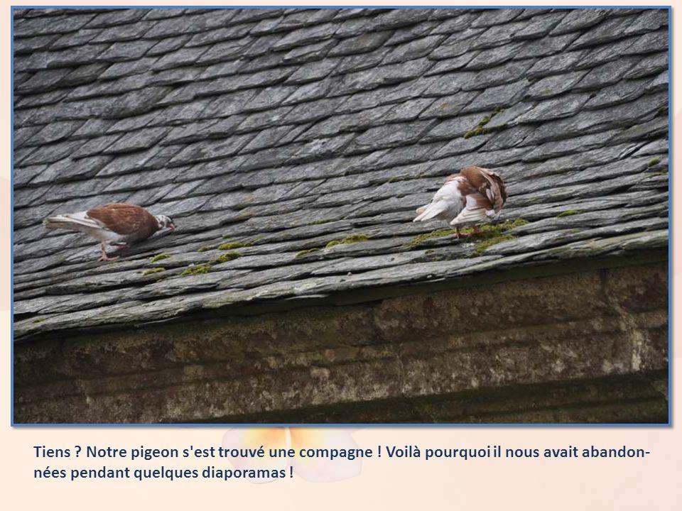 Tiens. Notre pigeon s est trouvé une compagne