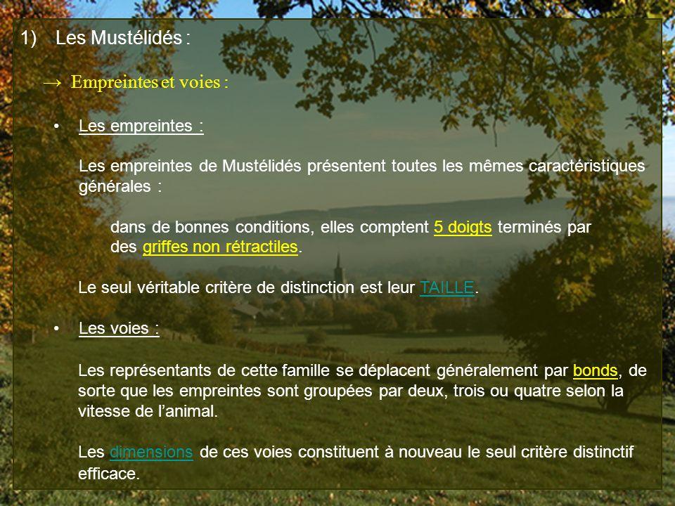 Les Mustélidés : → Empreintes et voies : Les empreintes :