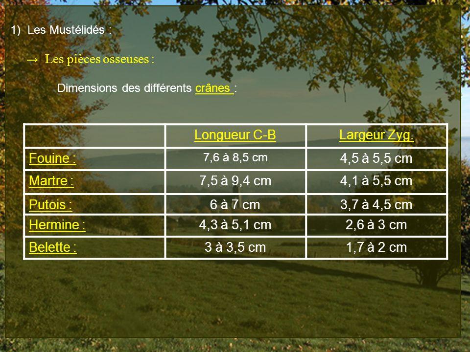 Longueur C-B Largeur Zyg. Fouine : 4,5 à 5,5 cm Martre : 7,5 à 9,4 cm