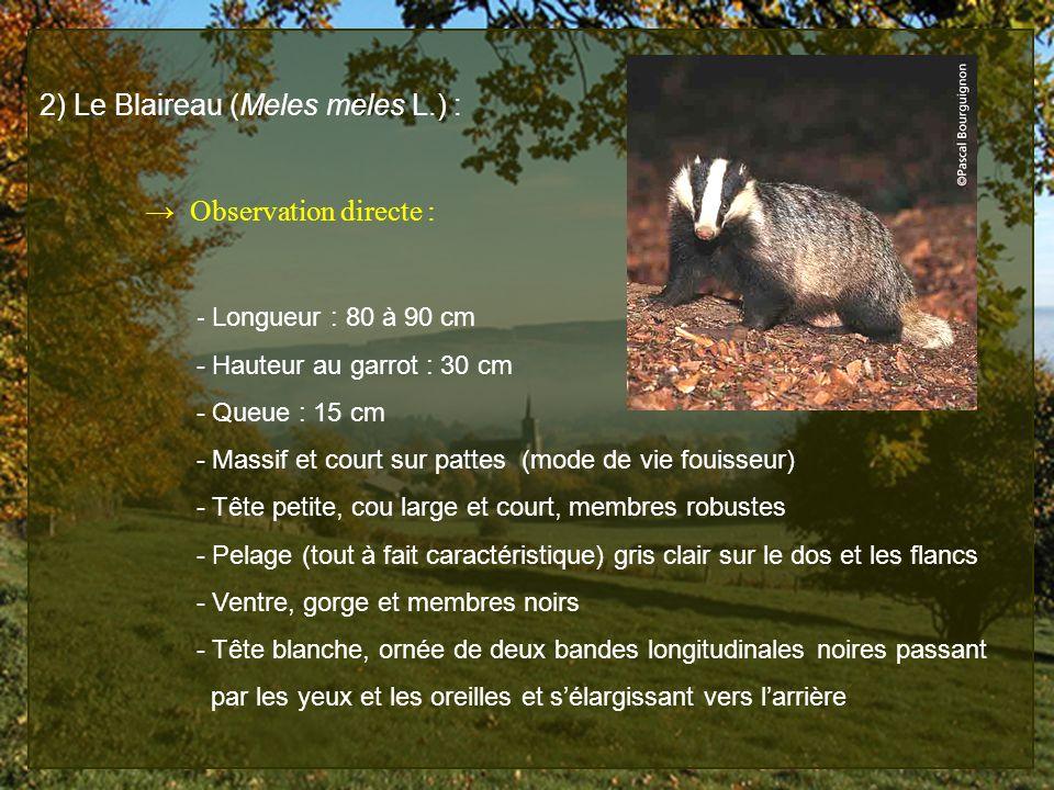 2) Le Blaireau (Meles meles L.) :