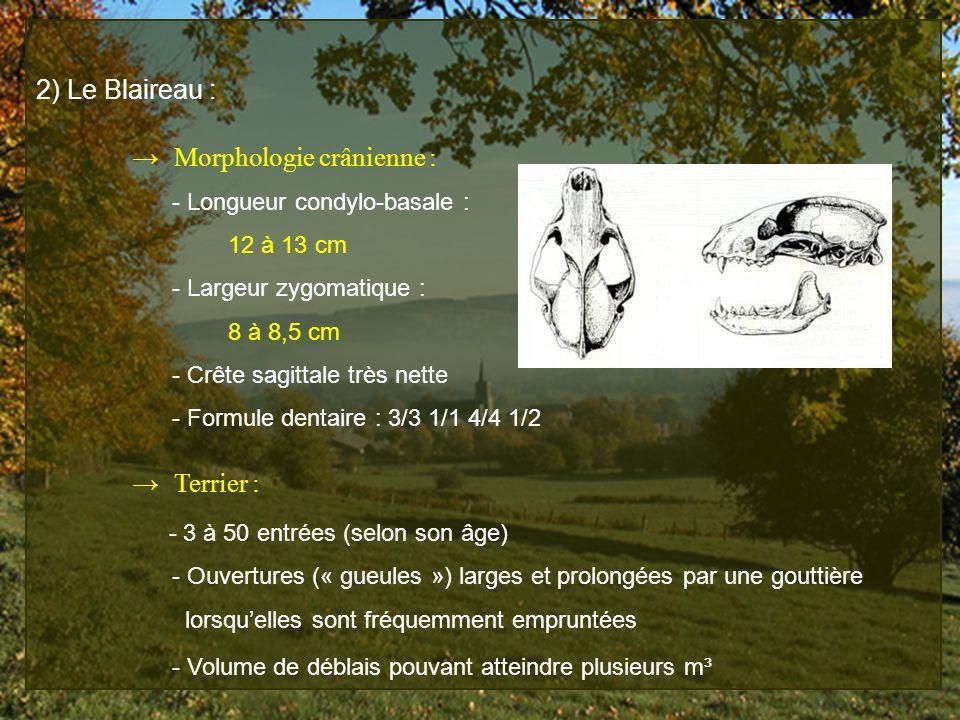 → Morphologie crânienne :