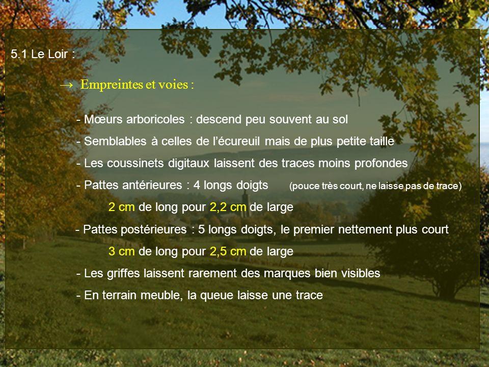 - Mœurs arboricoles : descend peu souvent au sol