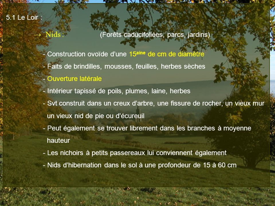 5.1 Le Loir : → Nids : (Forêts caducifoliées, parcs, jardins) - Construction ovoïde d'une 15aine de cm de diamètre.