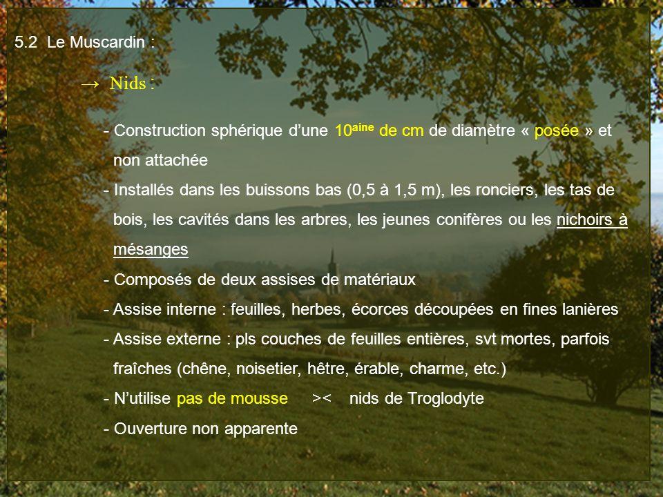 5.2 Le Muscardin : → Nids : - Construction sphérique d'une 10aine de cm de diamètre « posée » et.