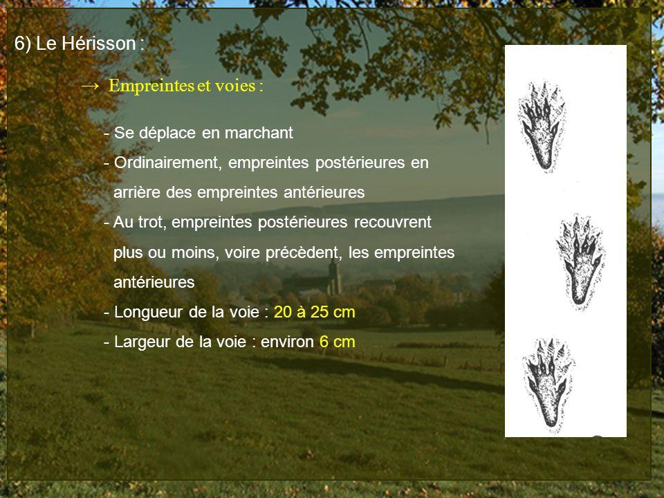 6) Le Hérisson : → Empreintes et voies : - Se déplace en marchant