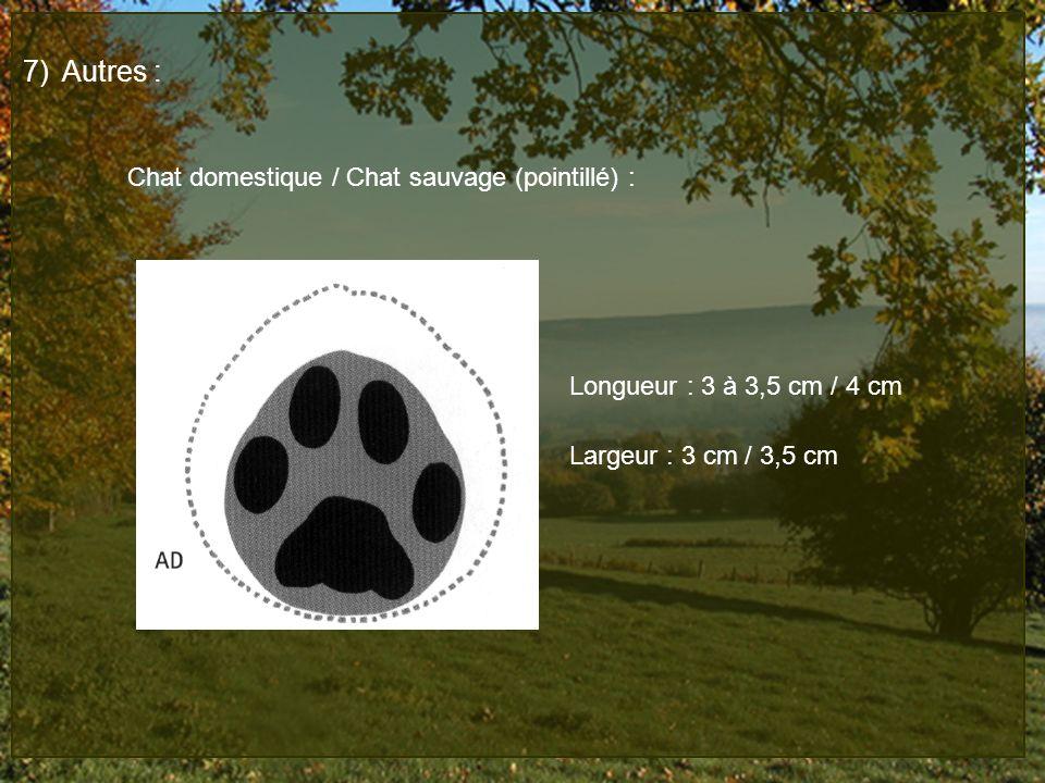Autres : Chat domestique / Chat sauvage (pointillé) : Longueur : 3 à 3,5 cm / 4 cm.
