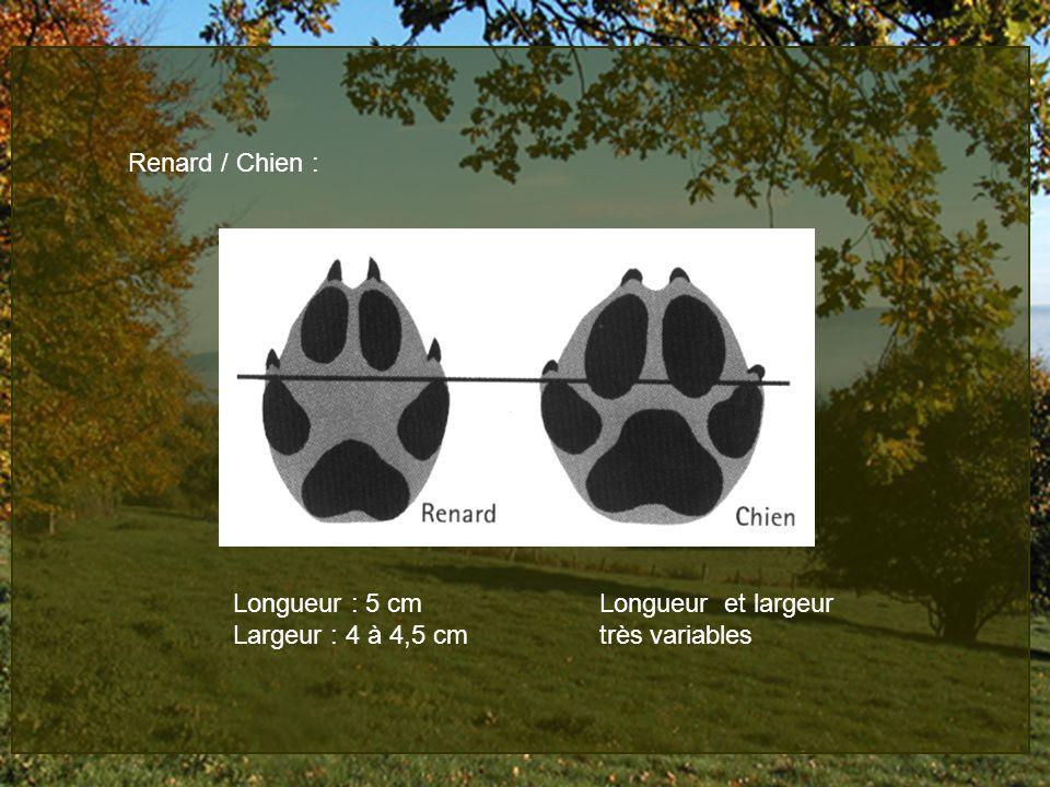 Renard / Chien : Longueur : 5 cm Longueur et largeur.