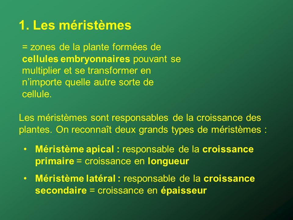 1. Les méristèmes