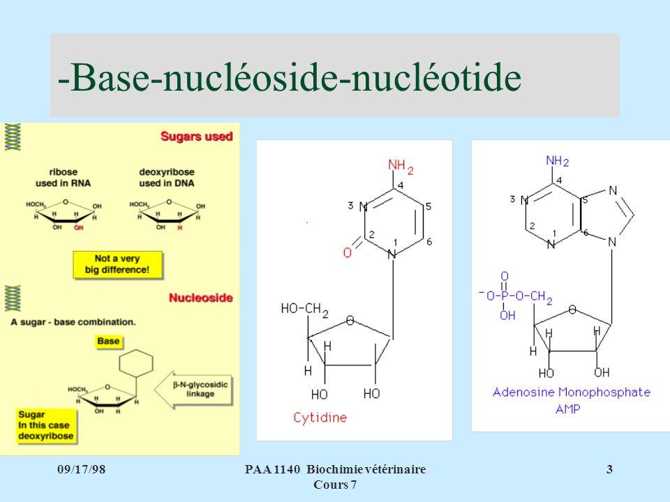 -Base-nucléoside-nucléotide