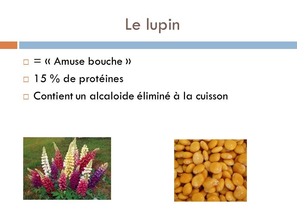Le lupin = « Amuse bouche » 15 % de protéines