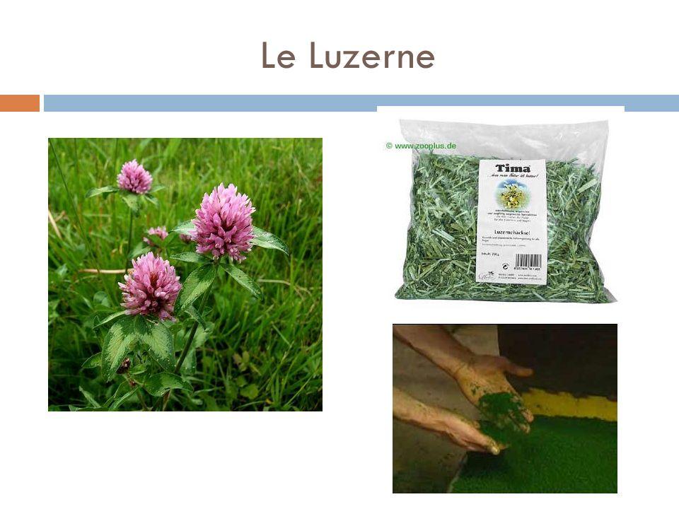 Le Luzerne