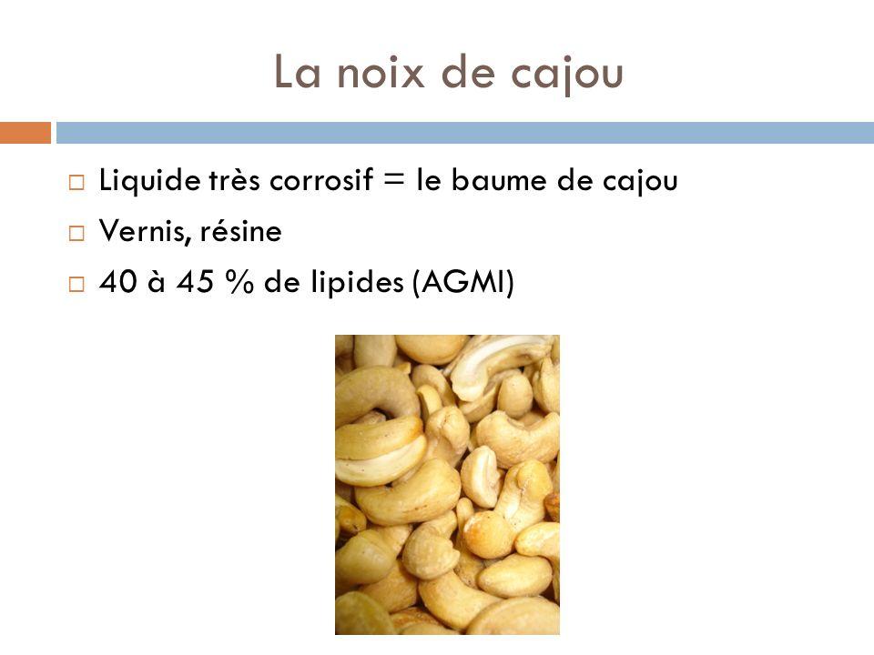 La noix de cajou Liquide très corrosif = le baume de cajou