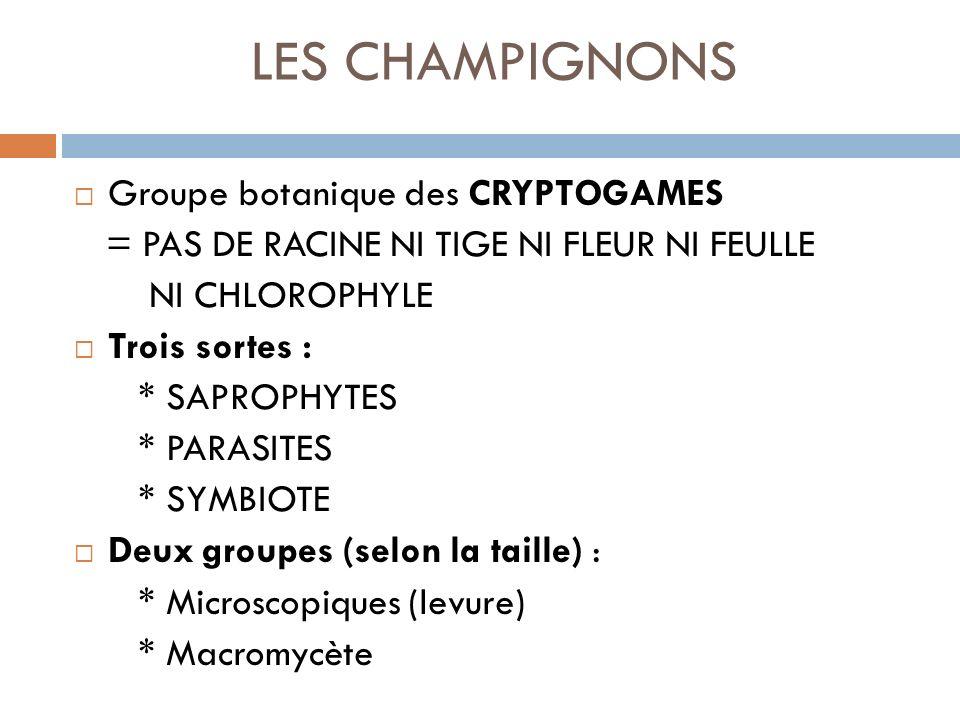 LES CHAMPIGNONS Groupe botanique des CRYPTOGAMES