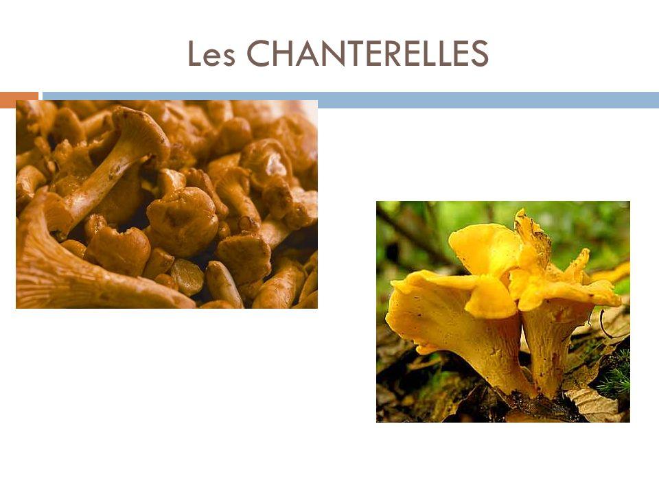 Les CHANTERELLES