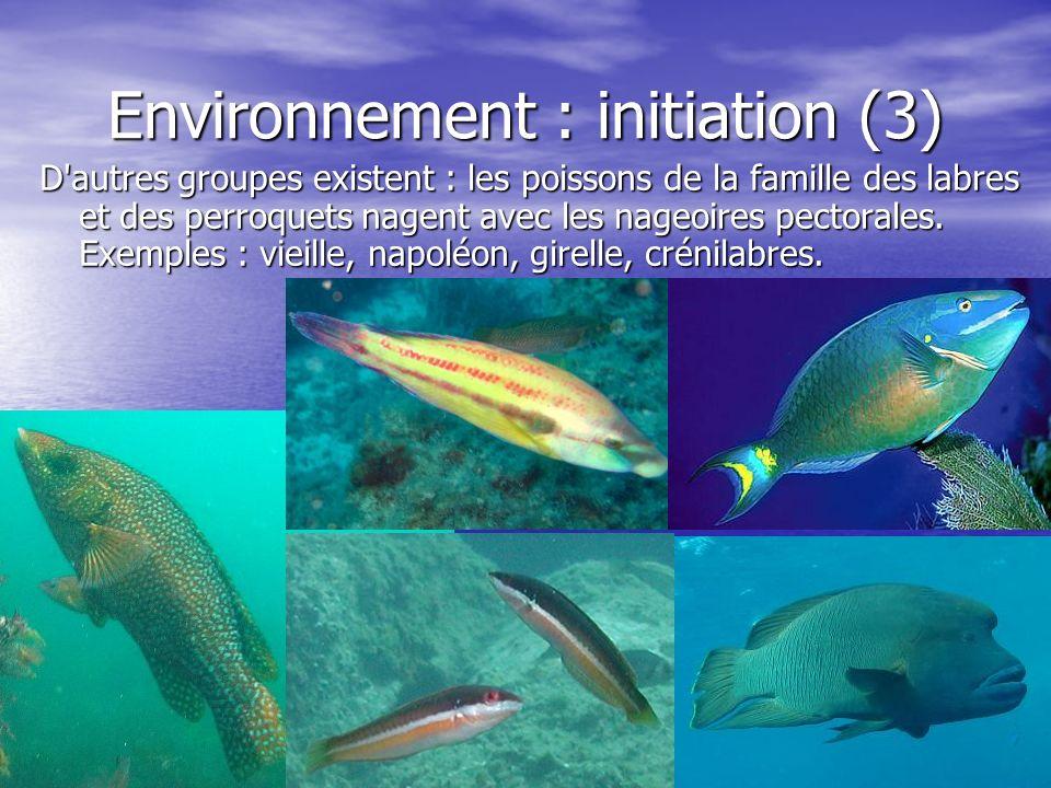 Environnement : initiation (3)