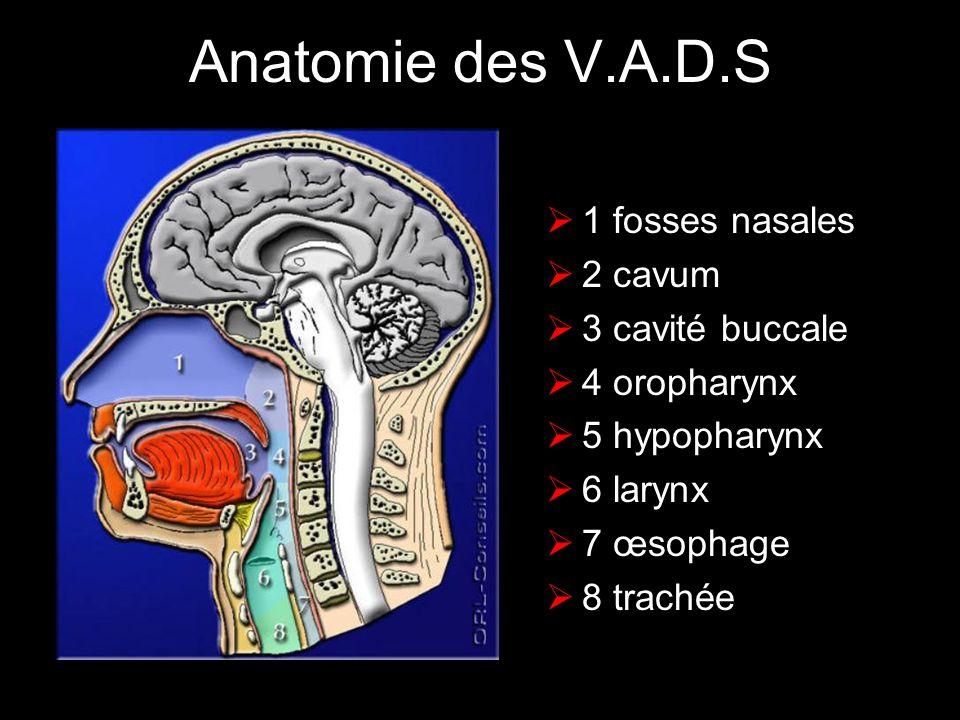 Anatomie des V.A.D.S 1 fosses nasales 2 cavum 3 cavité buccale