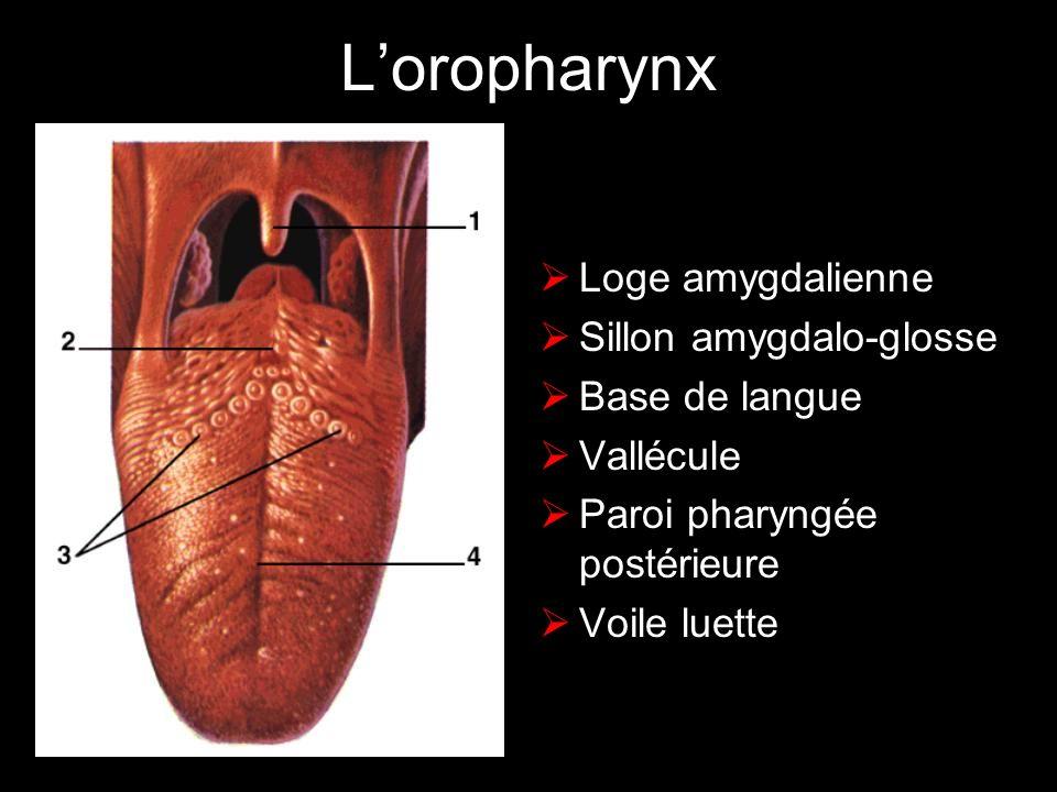 L'oropharynx Loge amygdalienne Sillon amygdalo-glosse Base de langue
